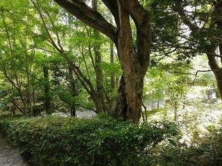 竜安寺7.jpg